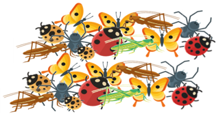 Variety of illustrated insects